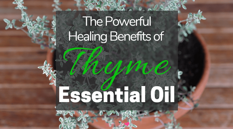 The Healing And Medicinal Properties Of Thyme Essential Oil