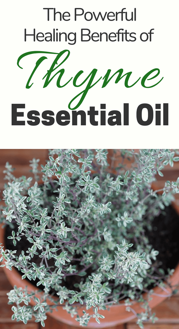 Thyme essential oil has many benefits and uses backed by science and ancient history. Check out all the ways that thyme oil benefits your health and wellness routines. #essentialoils